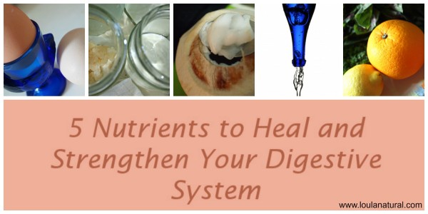 5 nutrients digestive banner