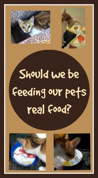 Should we be feeding our pets real food Loula Natural Pin