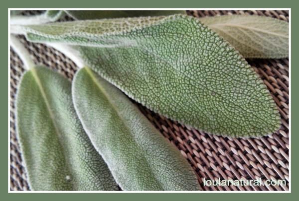 sage leaves Loula Natural